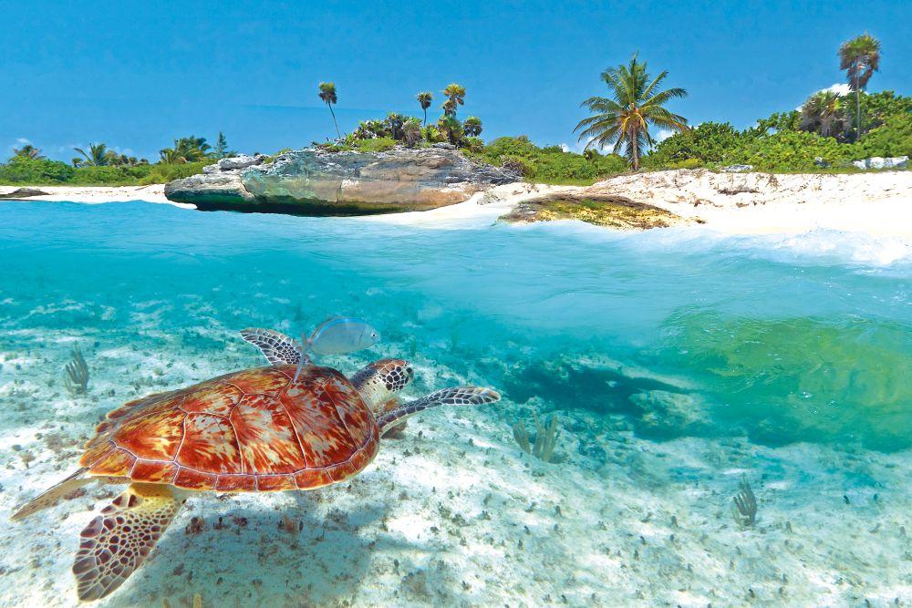 Voyage mexique r servez vos vacances mexique vip selection - Vacances originales mexique culsign ...